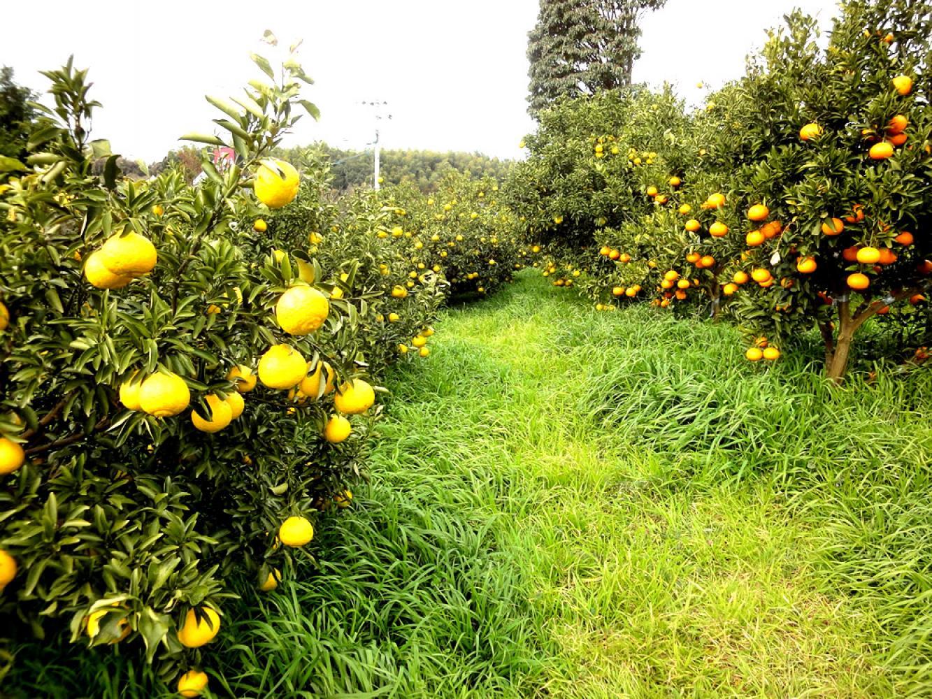 果樹 の 園 ま